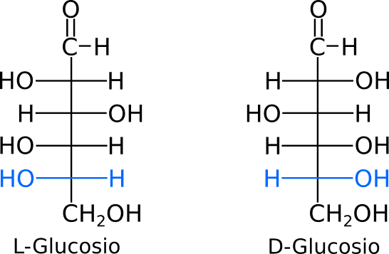 Proiezioni di Fischer del L-Glucosio e D-Glucosio